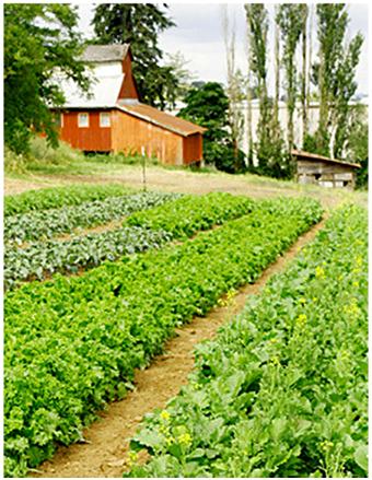 Photo credit: www.zengerfarm.com