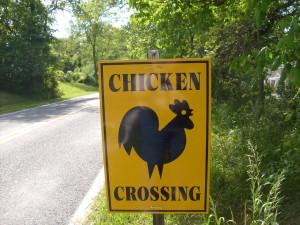 chicken_crossing