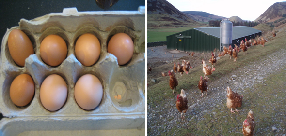 eggsandchickens2